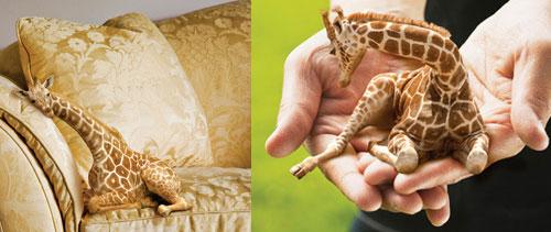 Petit-giraffe1