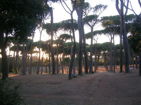Roman-PinesA