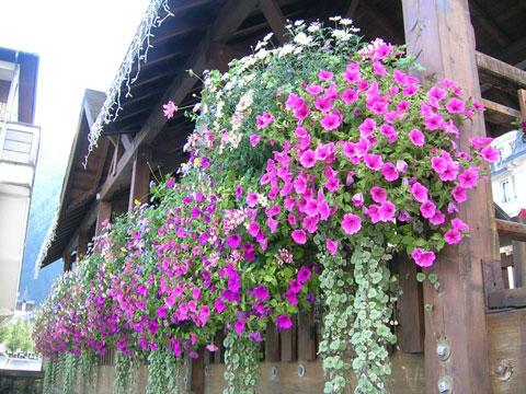FlowersA