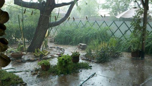 Garden Monsoon