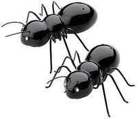 Black-Ant-Salt-Pepper-Shakers